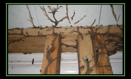 TermiteBaitingLeads