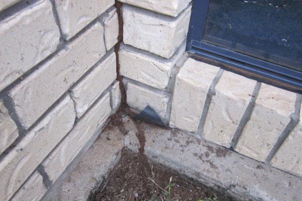 termites on concrete slab