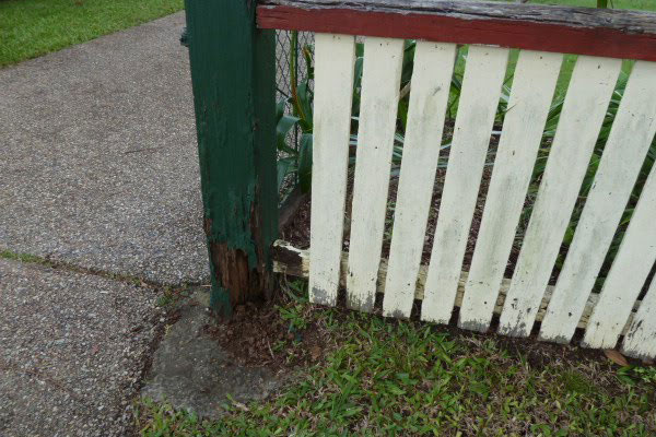 termites in fence